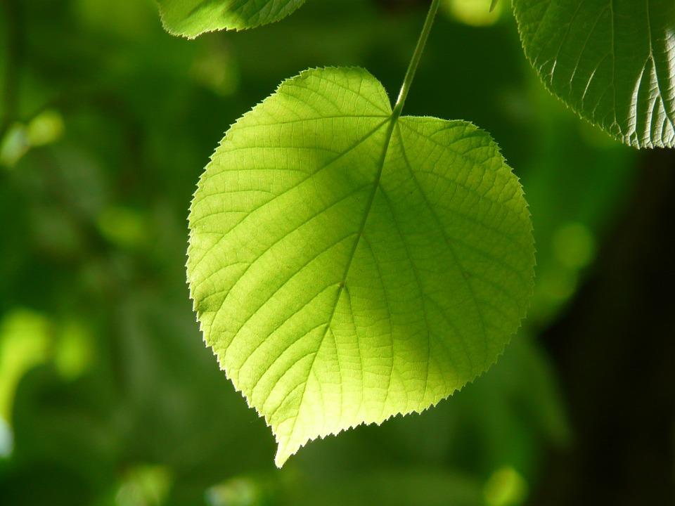 leaf-55859_960_720[1]