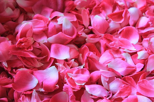 rose-petals-1155147__340