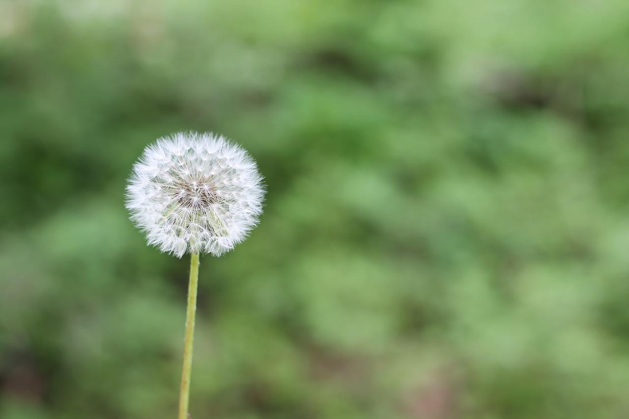 allergiaprimavera